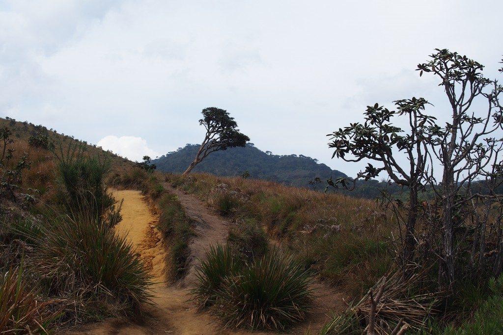 10-jours-Sri-Lanka-paysage-montagne