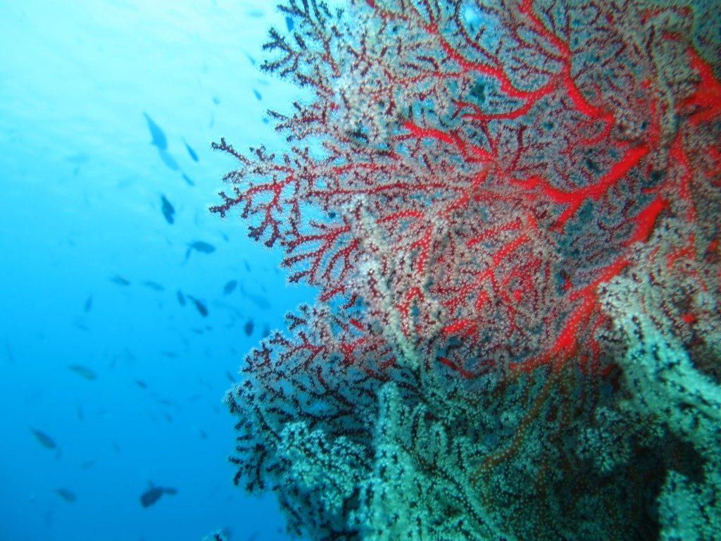 Plonger_epave_Liberty_Bali_merveille8