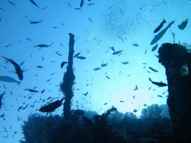 Plonger_epave_Liberty_Bali_merveille6