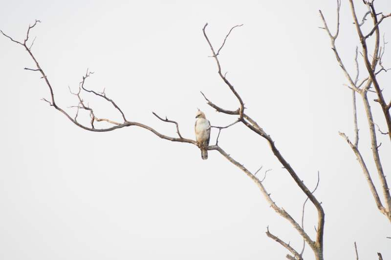 Un aigle observé lors de notre safari au Sri Lanka