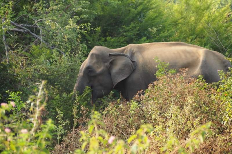 Un éléphant du safari