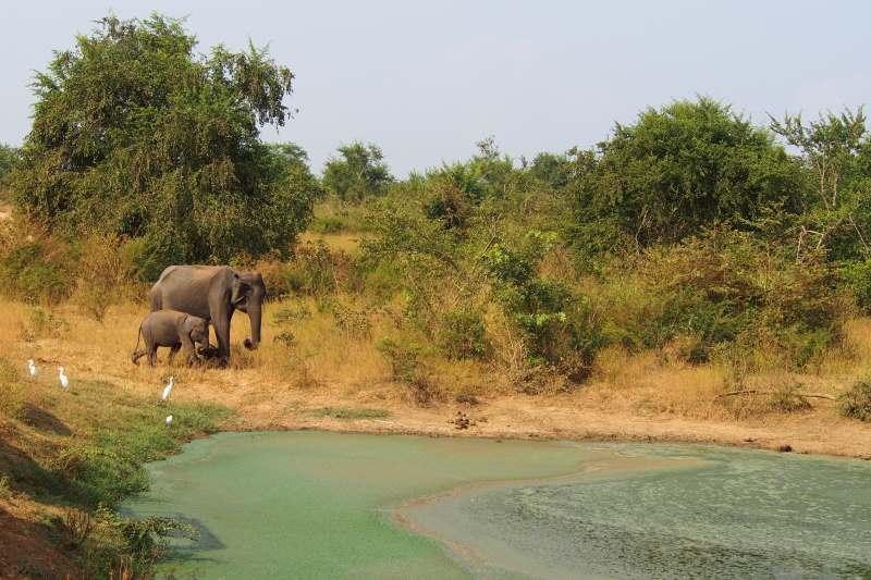 Deux éléphants au bord d'un étang