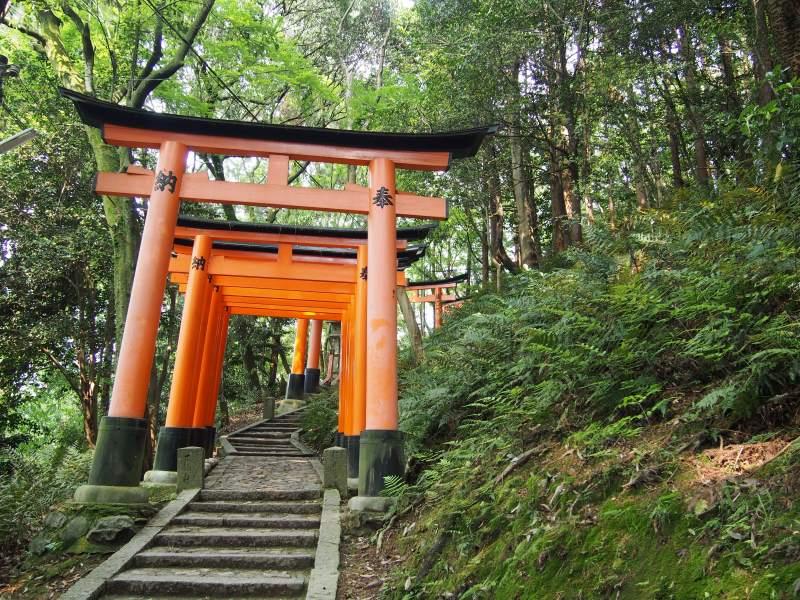 Balade sous les torii rouges
