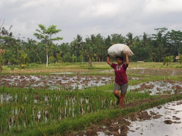 Top 10 des choses à faire à Bali : découvrir les rizières