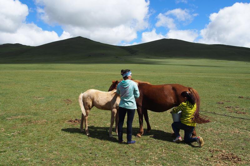 Tu sais que tu es en Mongolie quand : tu assistes à la traites des juments