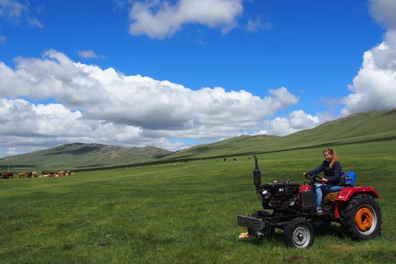 Tu sais que tu es en Mongolie quand : il y a du gazon à tondre !