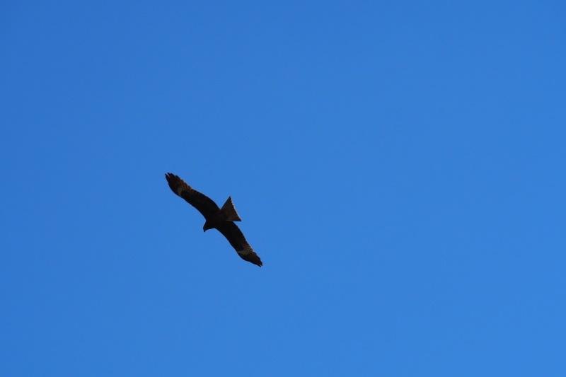 Tu sais que tu es en Mongolie quand : tu vois des aigles partout