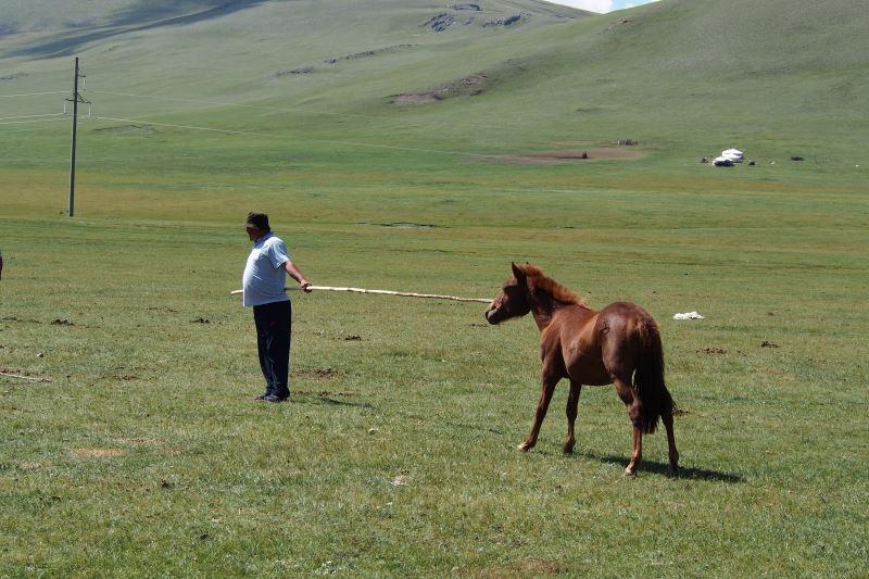 Tu sais que tu es en Mongolie quand : tu attrapes des chevaux sauvages