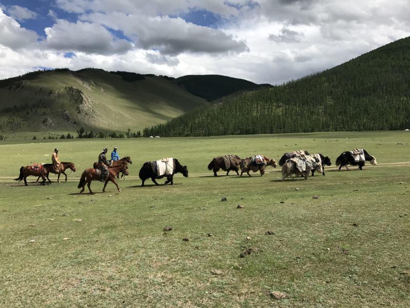 Voyage en Mongolie : troupeau de yacks