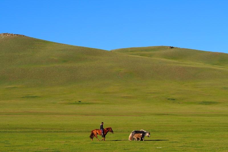 Carnet de voyage en Mongolie : troupeaux au petit matin