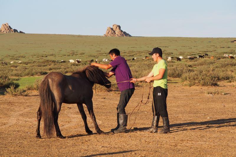 Carnet de voyage en Mongolie : dressage des chevaux