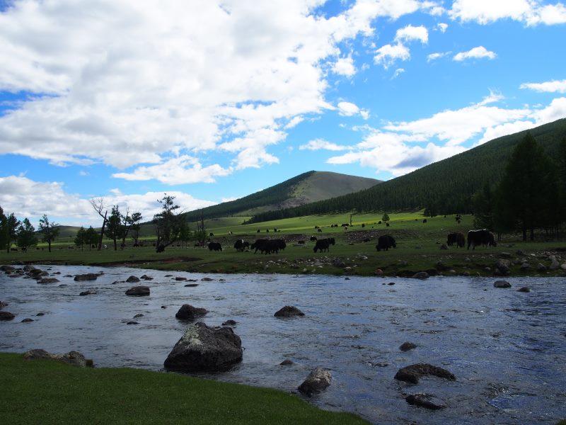 Carnet de voyage en Mongolie : paysage de la Vallée de l'Orkhon