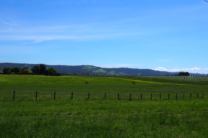 Top 8 des choses à faire autour de Melbourne : les vignes de Yara Valley