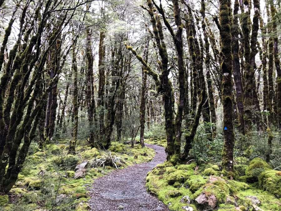 2 semaines en Nouvelle-Zélande : balade en forêt sur le Arthur's Pass Track