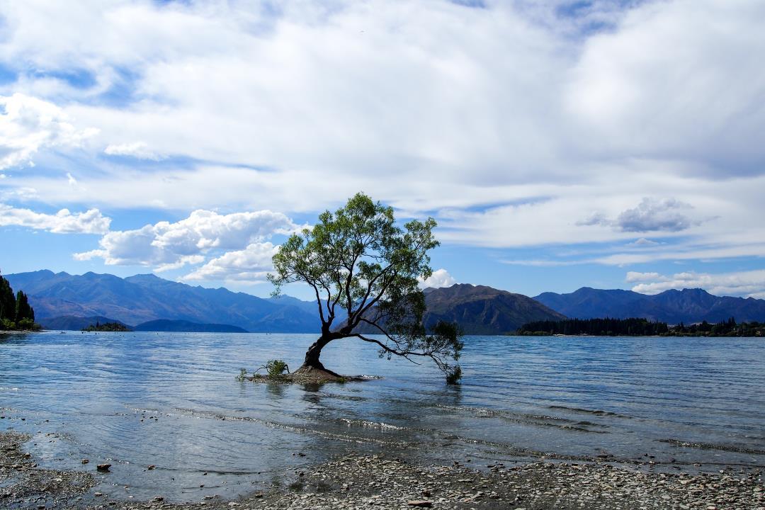 2 semaines en Nouvelle-Zélande : le lonely tree sur le lac de Wanaka