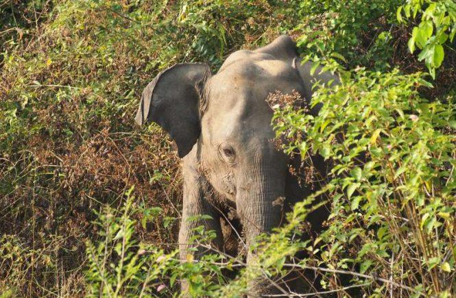 Un autre éléphant du safari