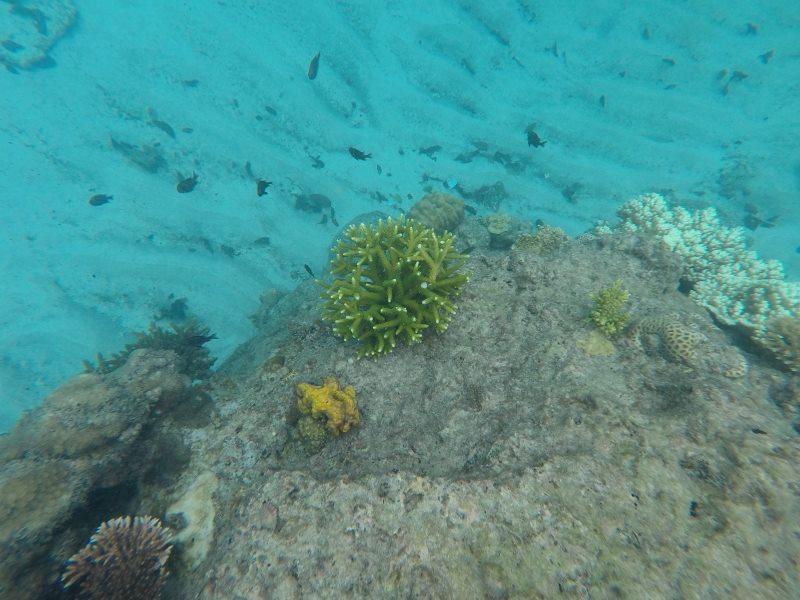 Coraux verts et jaunes au îles Perhentian